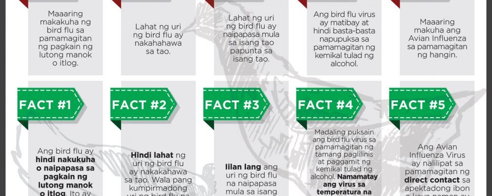AVIAN_FLU_MYTHS_VS_FACTS