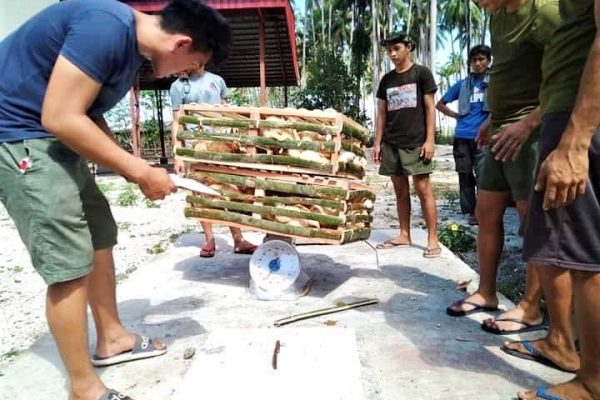 Army, Ex-Rebels Team Up at BAVI's 1st Poultry Farm in Sulu